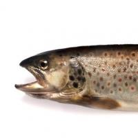 Ökologische Fischzucht