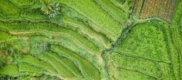 hegl-landwirtschaft-feld-von-oben-luftaufnahme.jpg.jpeg